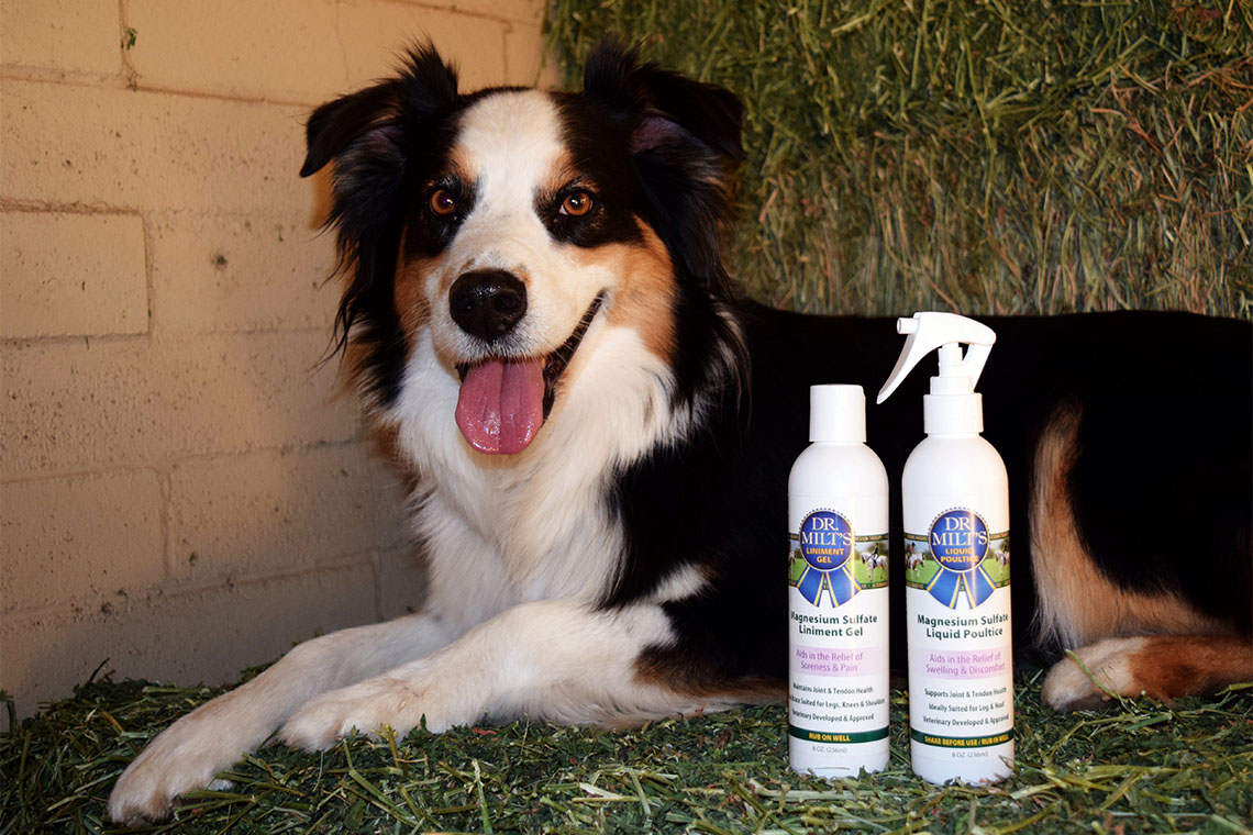 Dog with Dr. Milt's Spray Poultice and Liniment Gel