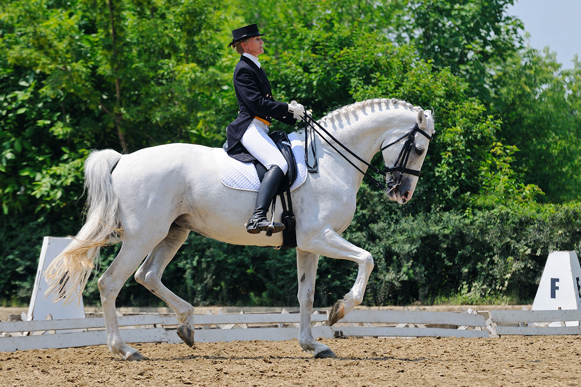 Dressage Horse during competition